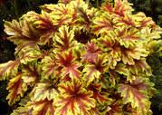 Тульский питомникю Плодовые растения,  цветы,  розы,  клематисы,  хвойники