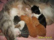 Получите в подарок  верного и веселого друга - котенка в Туле
